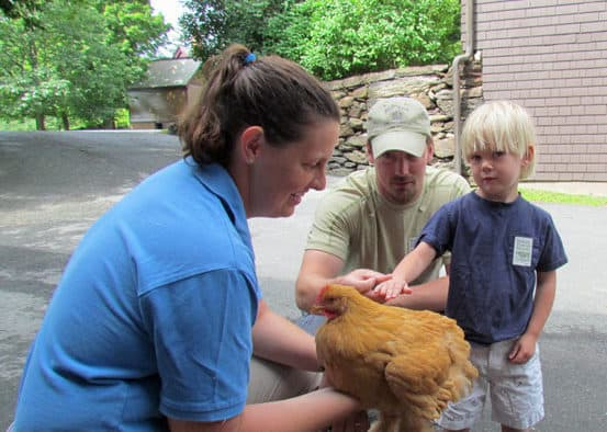 Heritage Chicken Days makes education fun at Billings Farm & Museum
