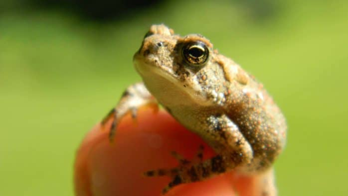 This small frog hitched a ride  on a Brandon man's thumb earlier this summer.
