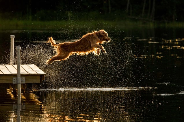Dock Diving Dogs Compete To Benefit Humane Society The Mountain Times