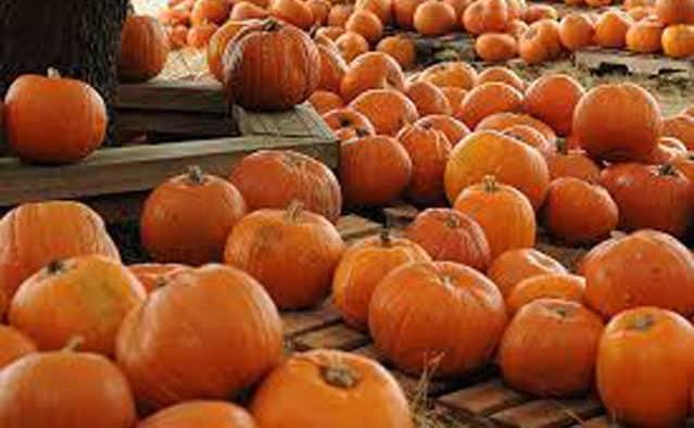 'Tis the season to eat pumpkins