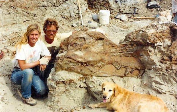 """""""Dinosaur 13"""" showcases T-Rex, Sue unveiling"""