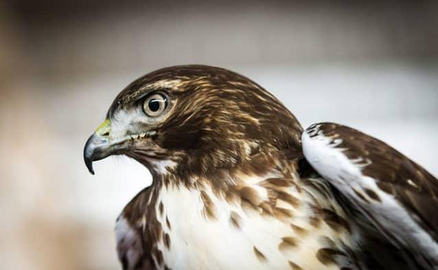 Get up close with live raptors at VINS photography workshop
