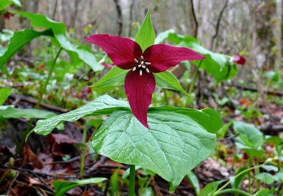 Take in the beauty of spring wildflowers in walking tour