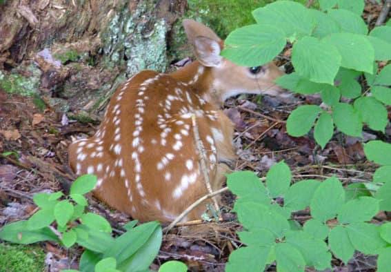 Young wildlife belong in the wild