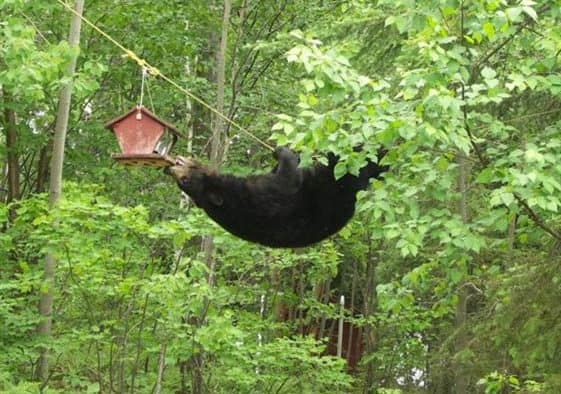 Vt. Fish & Wildlife urges everyone to avoid bear problems by removing food sources