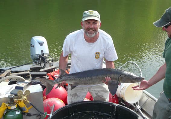 Anglers reminded of lake sturgeon protection and state law