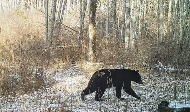 Wait to feed birds, Vermont Fish & Wildlife suggests
