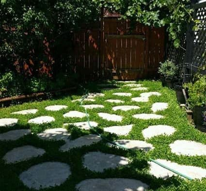 Clover Comeback: Today's twist to a lush, green, easy, eco-smart lawn alternative