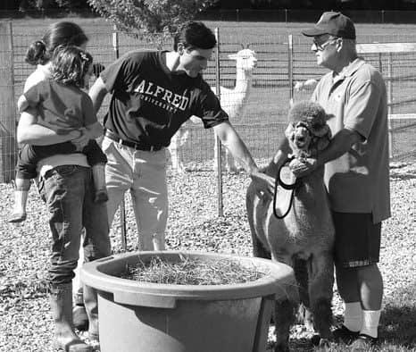 Local Brandon farm celebrates National Alpaca Farm Day