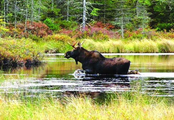 U.S. Fish and Wildlife plans to quadruple the size of wildlife refuge in Vt.