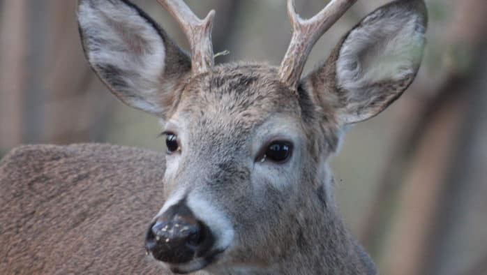 Age requirement to go up for free permanent hunting/fishing licenses, Jan. 1