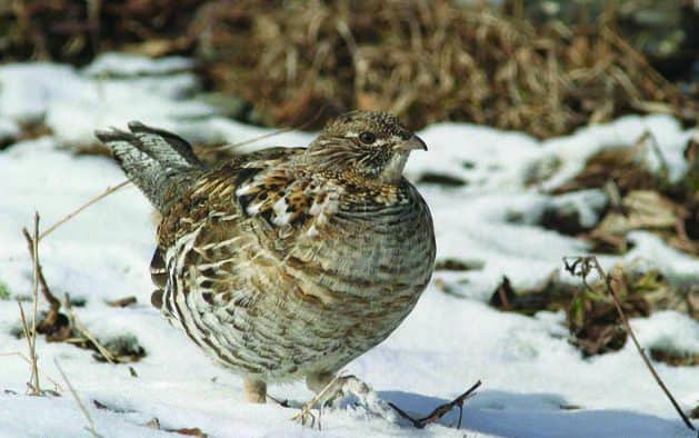 Learn how animals survive harsh Northern winters