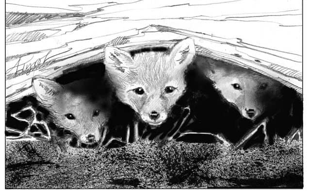 Foxes are active in late winter across Vermont and New Hampshire