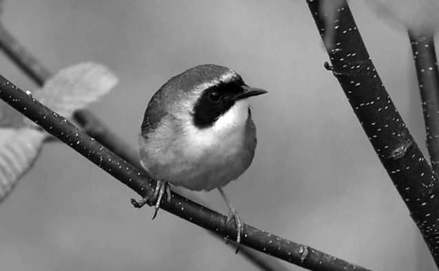 State's insect-eating birds in decline, others decreasing