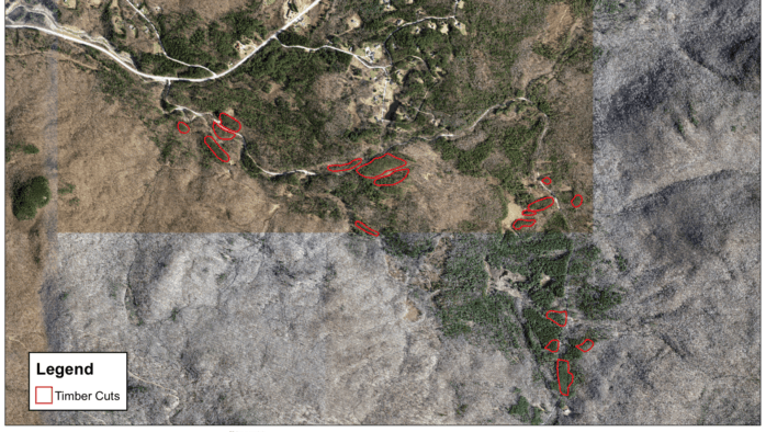 Facing invasive species, Mendon to remove trees