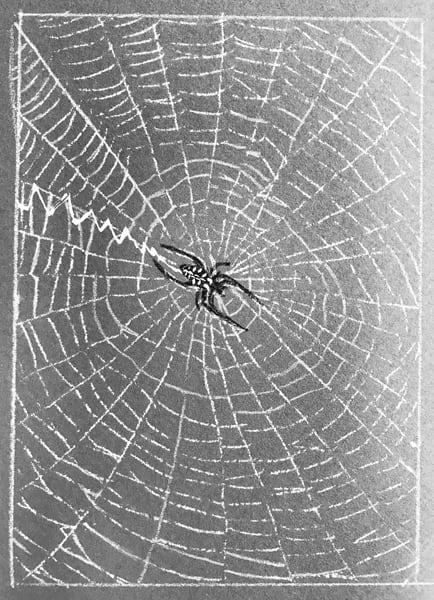 TOS_Spider_Web
