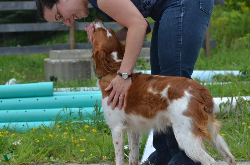 4-year-old Brittany Spaniel, Orion, with owner Beth Nicholson.