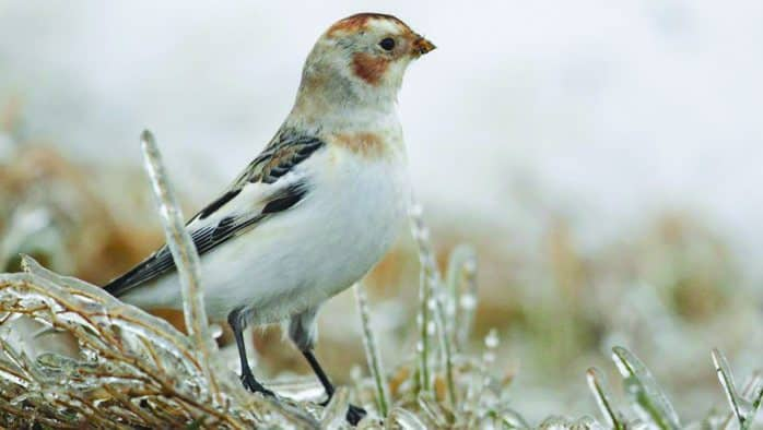 For the Birds: Gordon Ellmers presents his Avian Photography