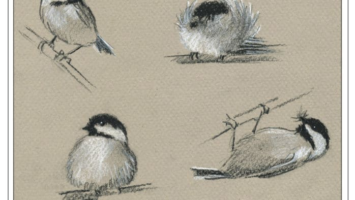 The Outside Story: The amazing chickadee