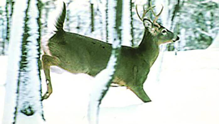 Muzzleloader and the second archery deer season are Dec. 7-15