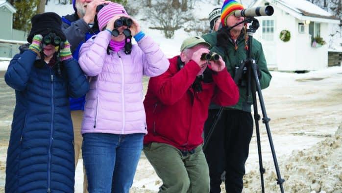 Rutland Audubon leads birdwatching journey in the Champlain Valley