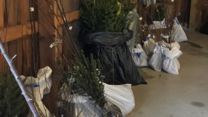 Trees for sale from conservation district