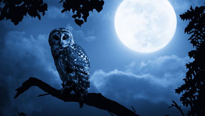 Prowl for owls, then wine and dine at VINS