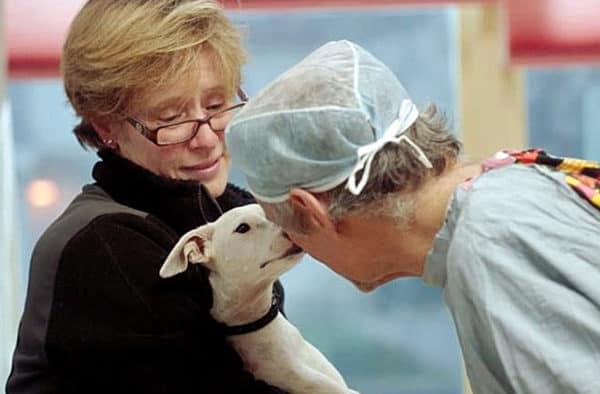 'The Dog Doc' kicks off MNFF at Billings Farm and Musuem