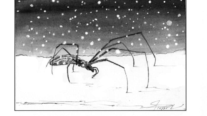 Snow spiders: Rule-breakers