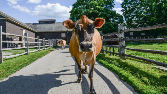 Billings Farm & Museum provides COVID-19 Statement