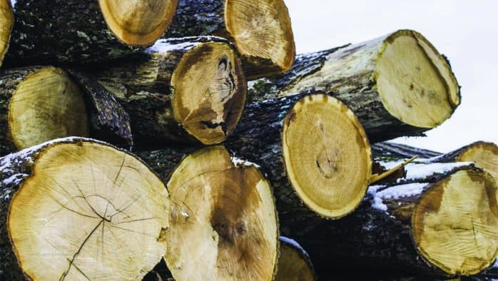 State offers incentives to become a master logger