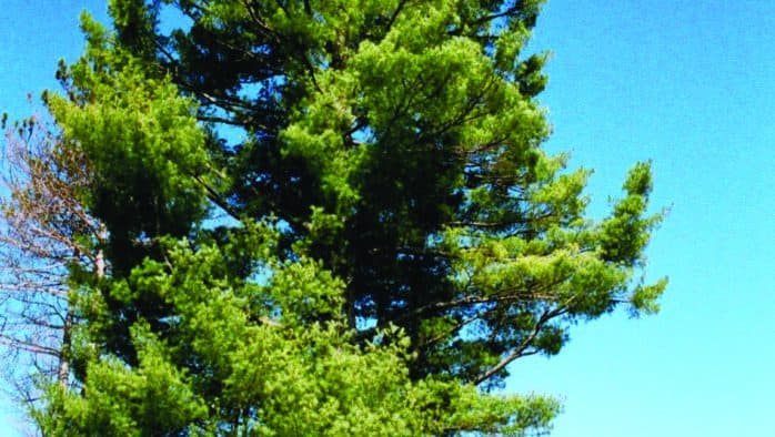 Tree Talk: A gift of remembrance
