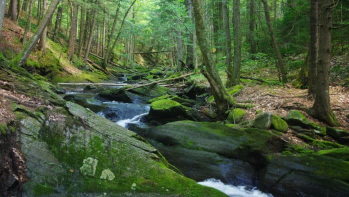 New Wilderness Preserve created in Bridgewater