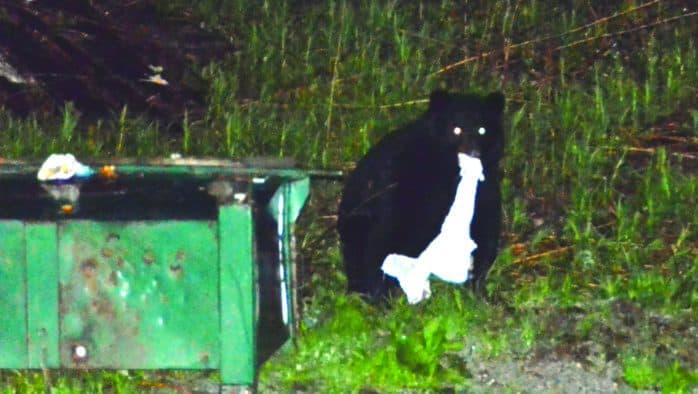 In bear country, put trash bins out morning of pick-up