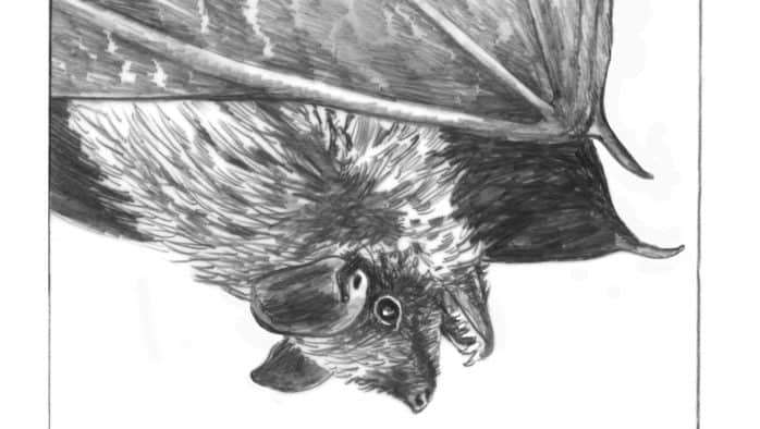 Bats emerge from hibernacula
