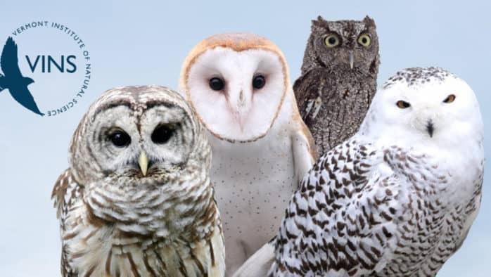 VINS reschedules the 2020 Owl Festival