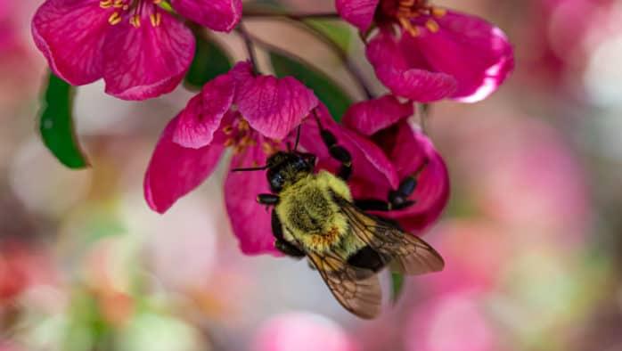 Pollinators are in peril