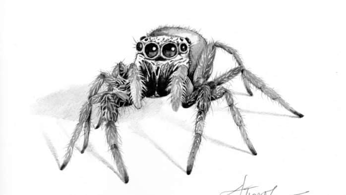 Spider eyes are watching you