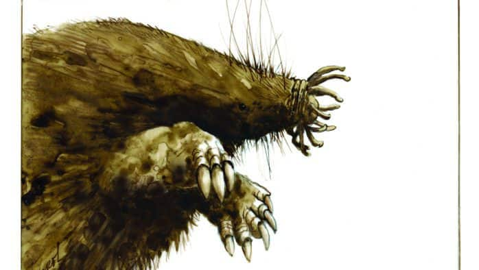 Star-nosed mole: a nose that knows