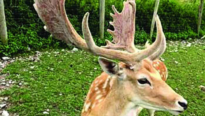 Retired RRMC physician conserves land at state's largest deer farm