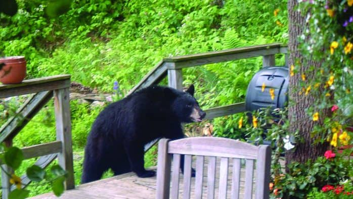More bears reported with new food scrap ban