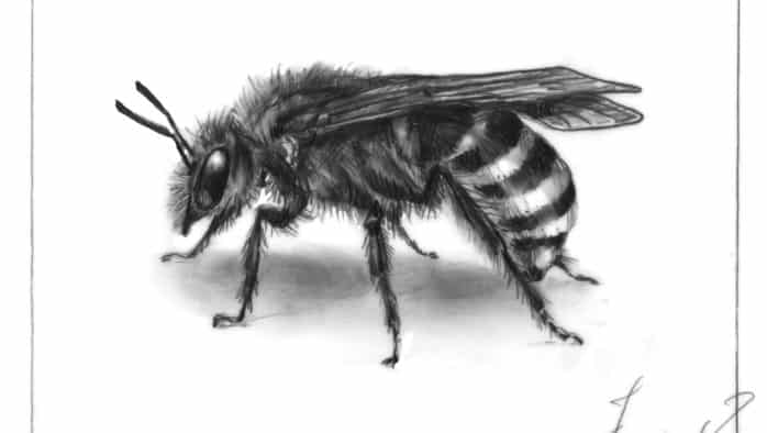 Sweat bees: diminutive and diverse