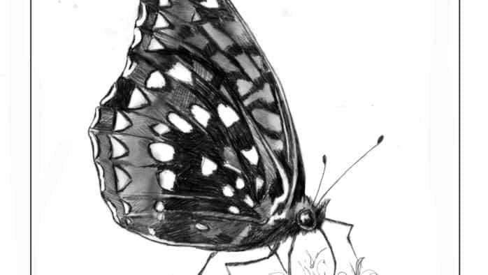 Butterflies sip sweet nectar
