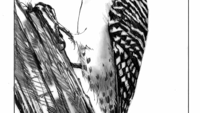 Red-bellied woodpeckers move north