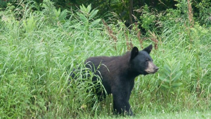 Be aware of bears in bear country