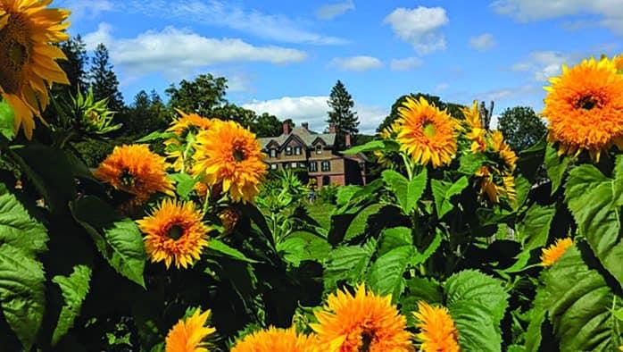 Billings Farm & Museum'ssunflower houseopens Aug. 6
