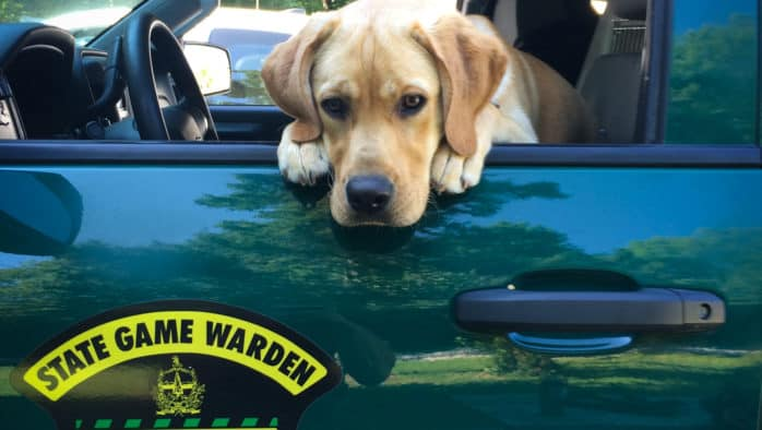 Game Wardens and state police rescue lost forager