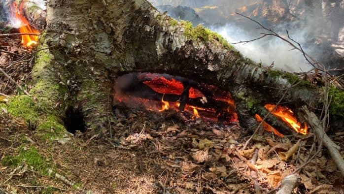 Forest fire on Deer Leap is 'under control'